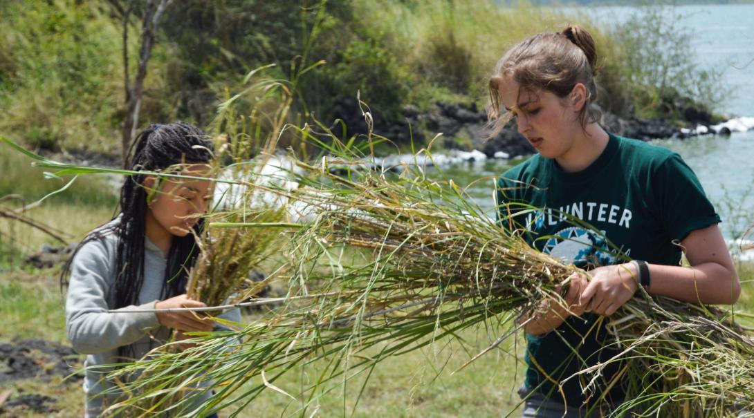 Voluntarios en Kenia trabajando para retirar plantas invasoras en una reserva de vida salvaje en Kenia.